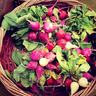 radishes at the crested butte farmers market
