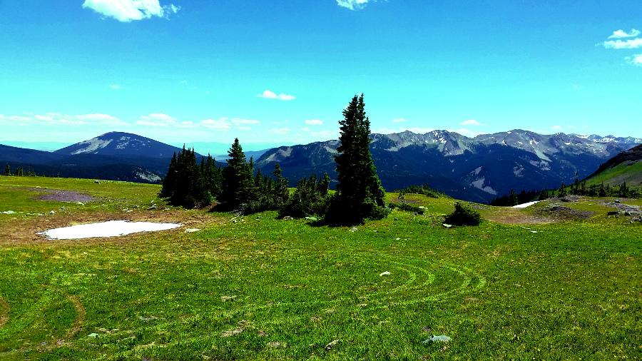 tire tracks in an alpine meadow