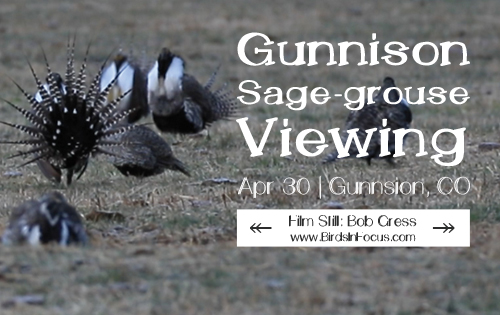gunnison sage-grouse viewing and presentation