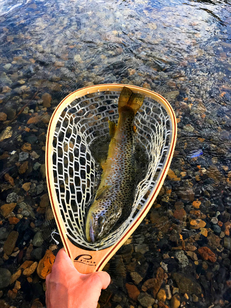 "Summer fishing nets a 21"" Brown Trout near Crested Butte Colorado"