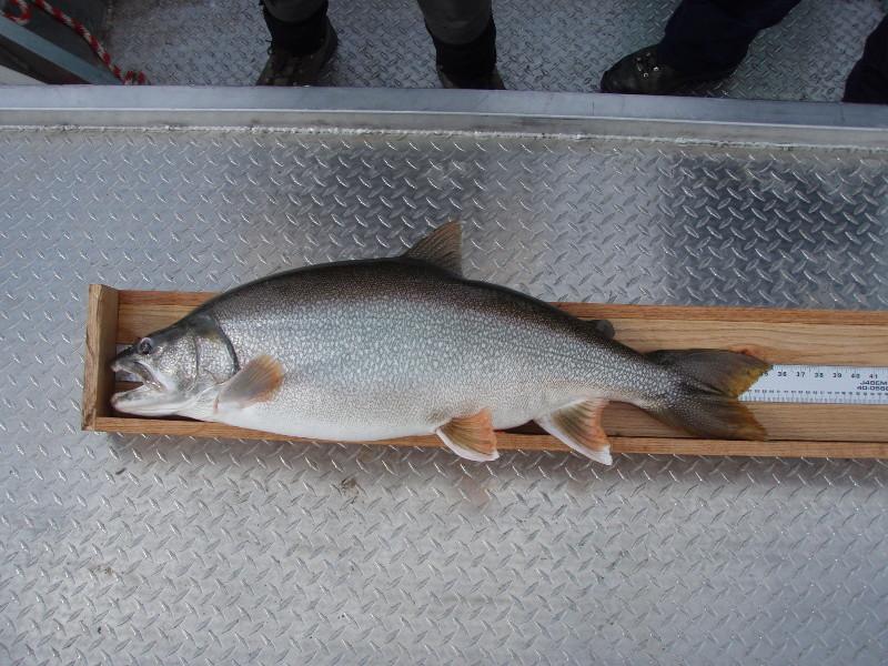 Fishing Tournaments Blue Mesa Reservoir Lake Trout