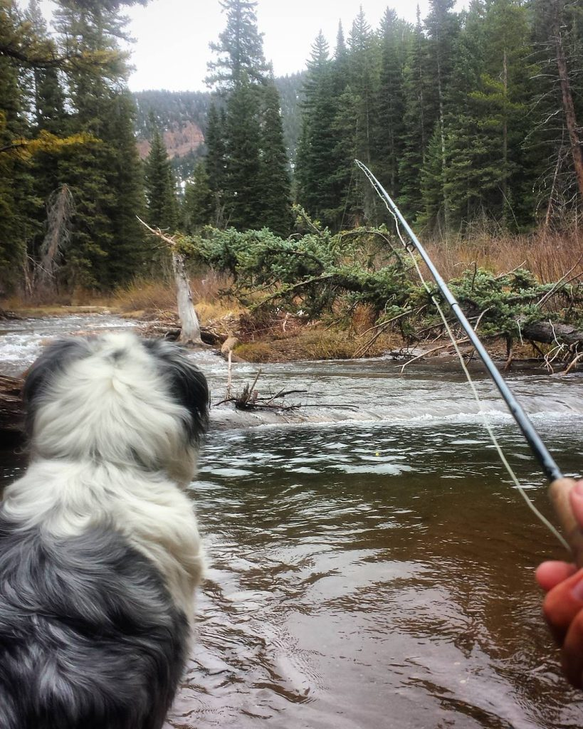cement creek fishing crested butte colorado