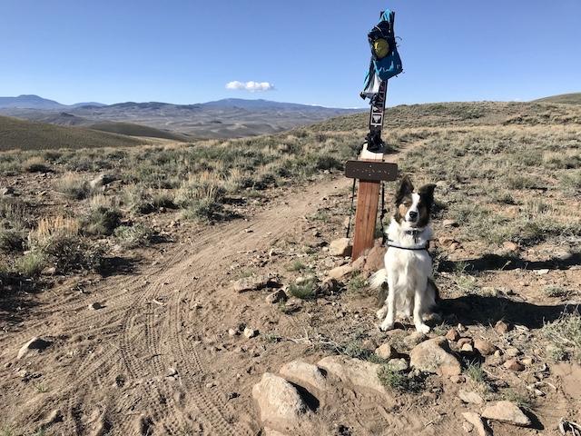 Photo of Dog on Signal Peak Trails