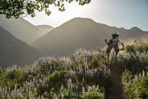 mountain biker surrounded by lupine near Crested Butte, CO