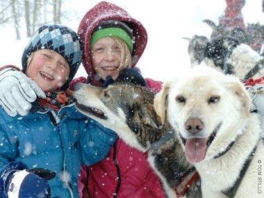 dog sled dogs