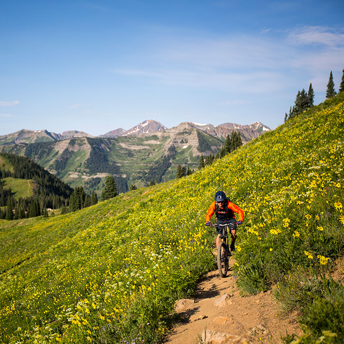 mountain biker in field of flowers outside Crested Butte
