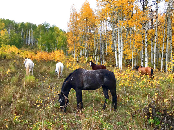 horseranch park horses and golden aspens