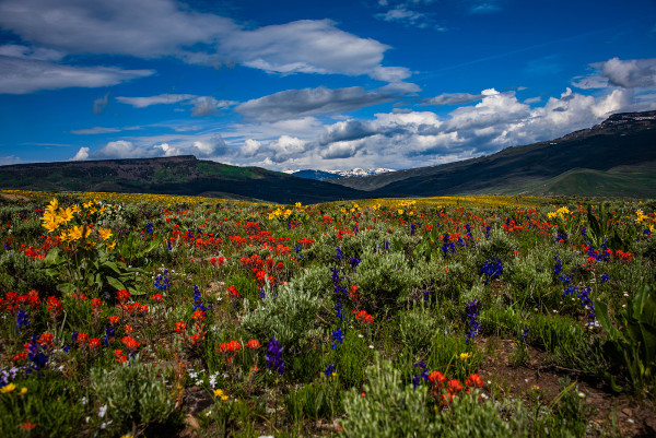 jacks cabin wildflowers near almont colorado