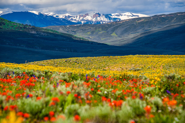 wildflowers and the castles almont colorado