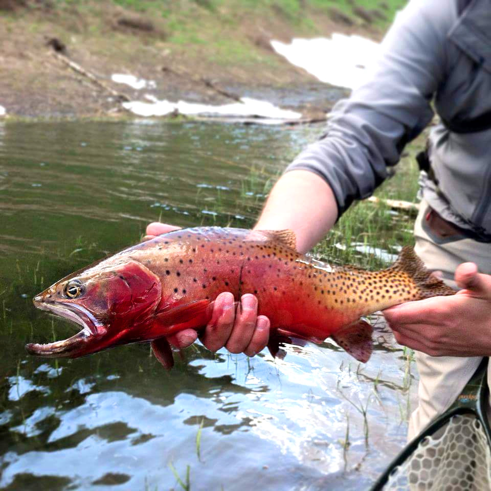 successful fly fishing trip in the Taylor River