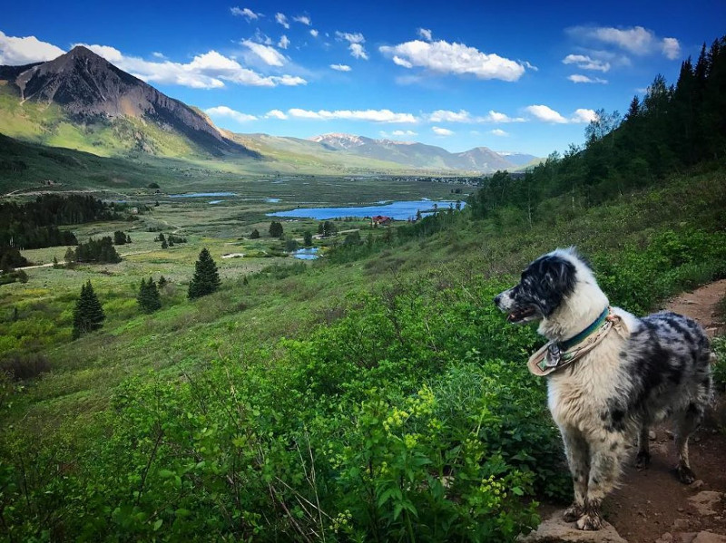 lower loop hiking trails crested butte