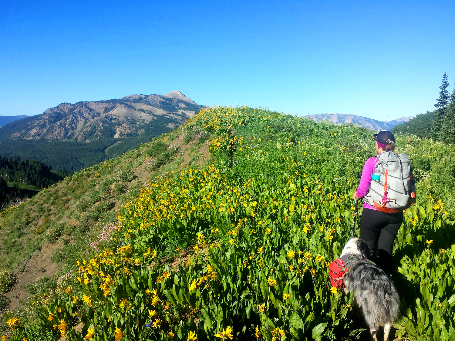 deer creek trail mule's ears sunflowers