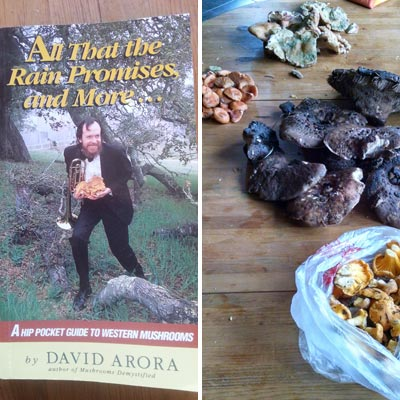 all that the rain promises and more, crested butte, mushrooming, hawk's wing, chantrelle