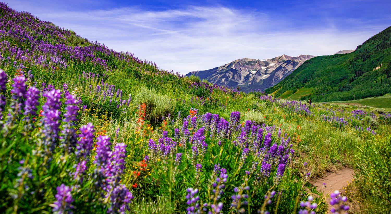 wildflowers and whetstone