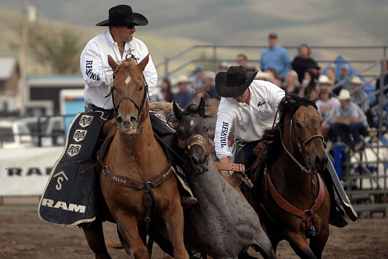 Two cowboys in white shirts and black hats wrangle a horse.