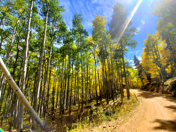 Waunita Pass road has spectacular fall colors!